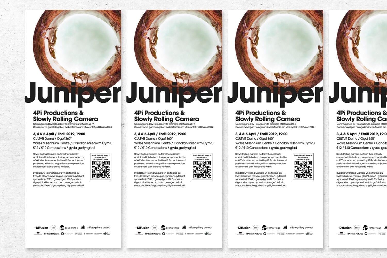 Juniper_8