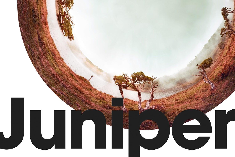 Juniper_9